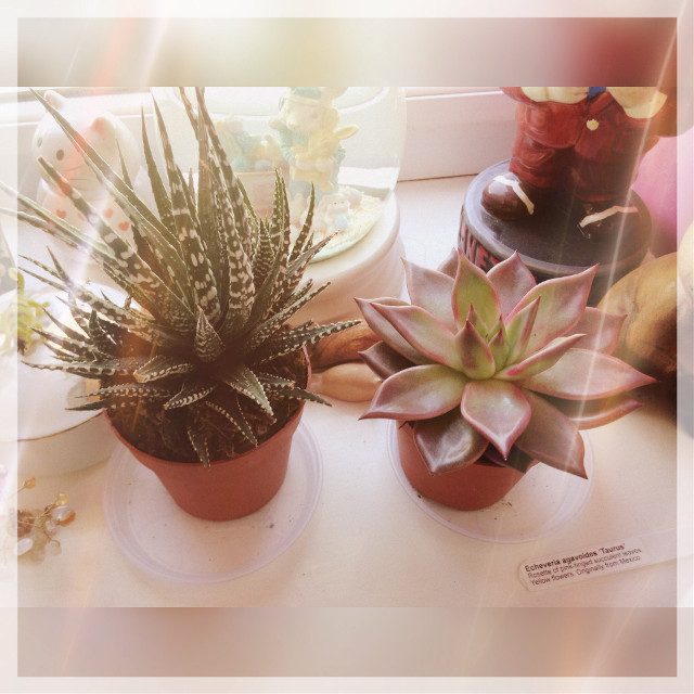 Cacti 🌵