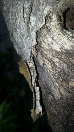 freetoedit texture