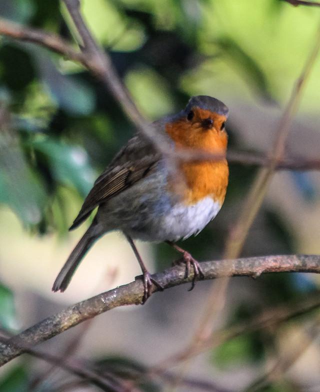 I'm looking at you, looking at me, looking at you... :) #robin