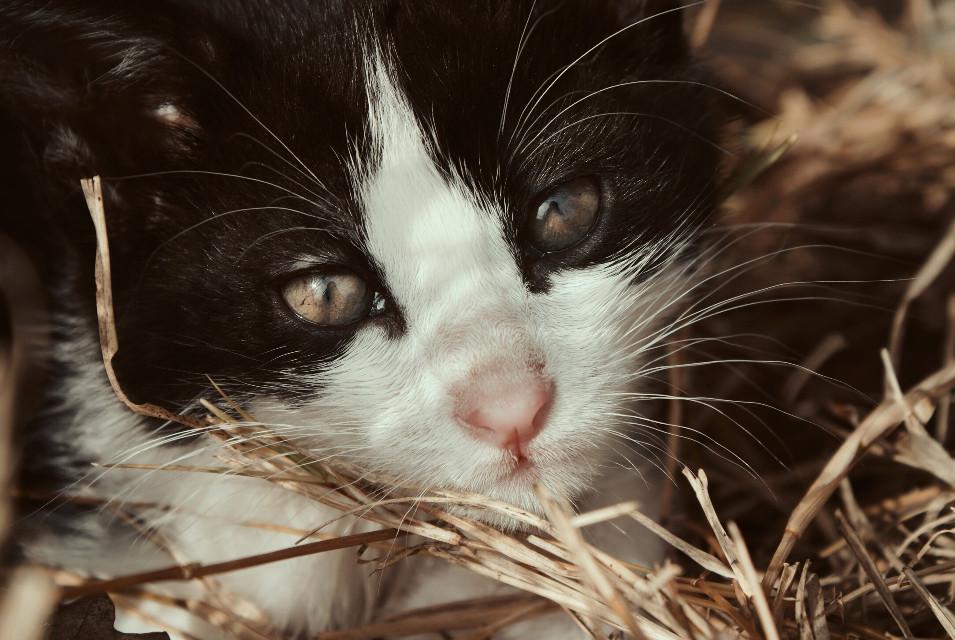 Little pretty♡ #Love #Cat #Beautiful #Cute #Little #Photography