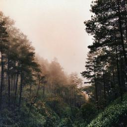 hdr colorsplash nature photography summer