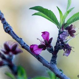 flower natura scampagnata passeggiando passione