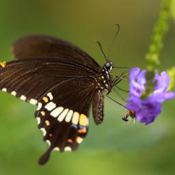 butterfly photography nature petsandanimals animals wppfloralcanvas
