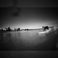 surf summer blackandwhite