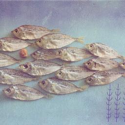 myphoto playwithyourfood swimmy fish umeboshi