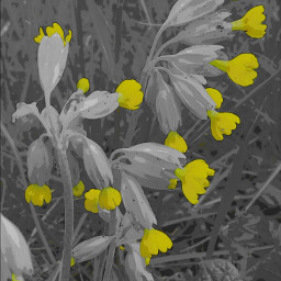comiceffect flower nature yellow colorsplash
