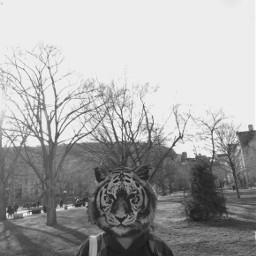 animal university environment nature blackandwhite