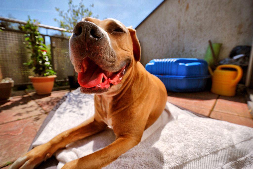 Summer ☀️🐾  #wwpsunnyday #wppanimals #pets #pet #pets&animals #dog #photography #photo #mydog #mypet #canon #dino
