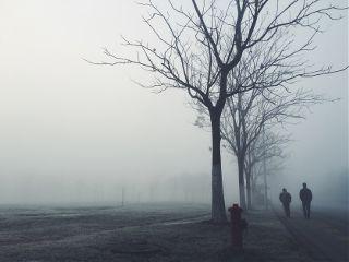 freetoedit nature photography fog