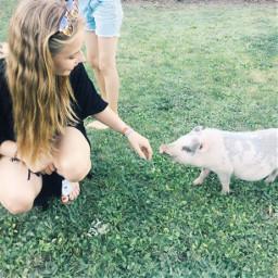 pig rudii love photography schwein