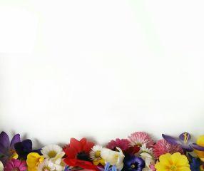 freetoedit flower blossom