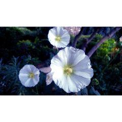 white flower flowers nature