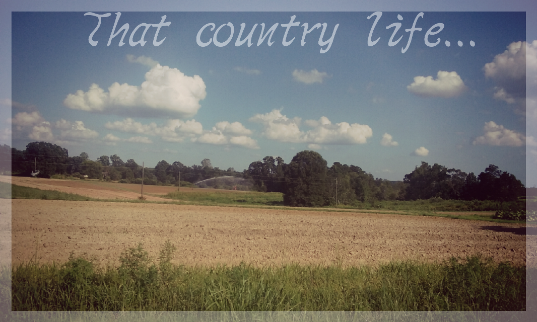 Capture these moments for they'll never be again. #countrylife #itswhereimfrom