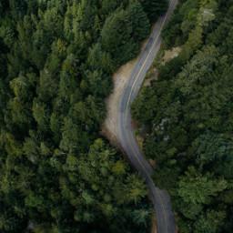 FreeToEdit art interesting nature trees green forest wood road drive mystique magic magical levitate